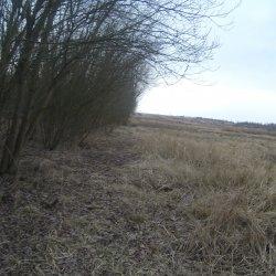 Wycinka drzew i krzewów Szczecińskie Towarzystwo Budownictwa Społecznego